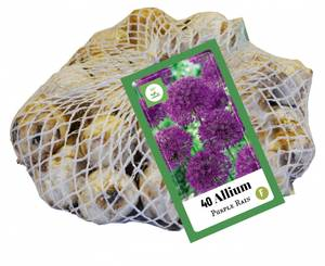 Bilde av Allium Purple Rain 40