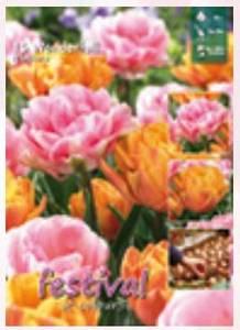 Bilde av Tulipan big pack Mix Wonderfull