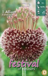 Bilde av Allium Forelock