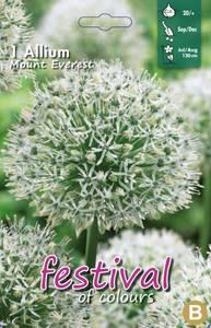Bilde av Allium Mount Everest
