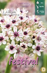 Bilde av Allium Silver Spring