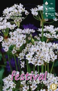 Bilde av Allium Neapolitanum 20stykk