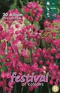 Bilde av Allium Oreophilum  20stykk