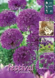 Bilde av Allium 'Purple Sensation' 15 pakk big pack