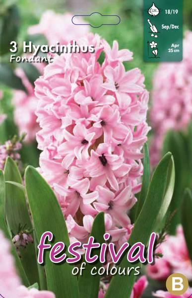 Hyacinths Fondant 3 stykk