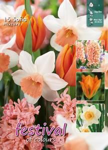 Bilde av Tulipan big pack Mix Sofia