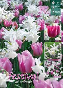 Bilde av Tulipan big pack Mix Wien
