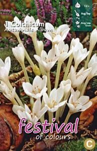 Bilde av Colchicum Autumnale Album