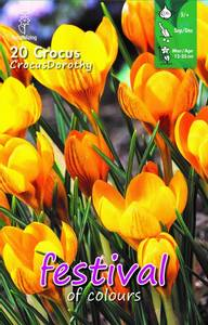 Bilde av Crocus Dorothy  20 pakk