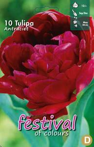 Bilde av Tulipan  Antraciet