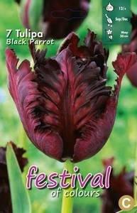 Bilde av Tulipan Black Parrot 7 stykk