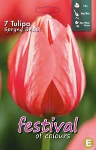 Bilde av Tulipan Spryng Break 7 stykk