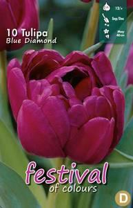 Bilde av Tulipan Blue Diamond