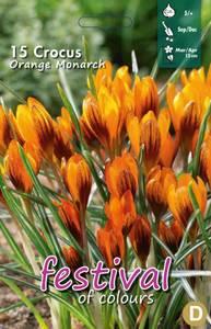 Bilde av Crocus Orange Monarch