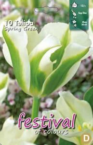 Bilde av Tulipan Spring Green