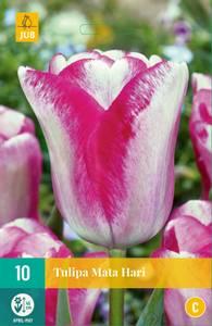 Bilde av Tulipan Mata Hari