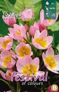 Bilde av Tulipan Bakeri Lilac Wonder 10stk