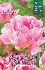 Bilde av Tulipan Angelique