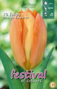 Bilde av Tulipan Orange Emperor