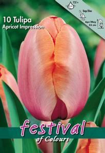 Bilde av Tulipan Apricot Impression 10 stykk