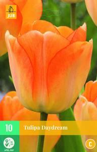 Bilde av Tulipan Daydream