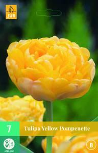 Bilde av Tulipan Yellow Pomponette 7 stykk