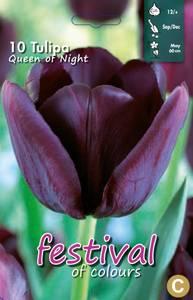 Bilde av Tulipan Queen of the Night 10 stykk