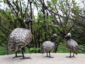 Bilde av Perlehøne kyllinger