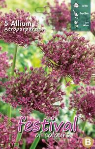 Bilde av Allium atropurpureum 5 pakk