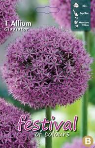 Bilde av Allium Gladiator