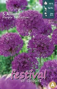 Bilde av Allium 'Purple Sensation' 5 pakk
