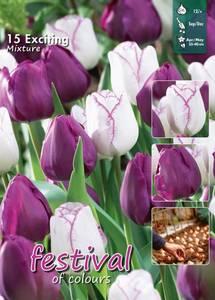 Bilde av Tulipan big pack mix Exciting