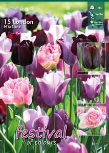 Bilde av Tulipan Big Pack  Mix London