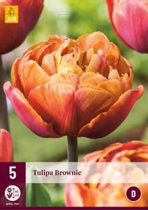 Bilde av Tulipan Brownie