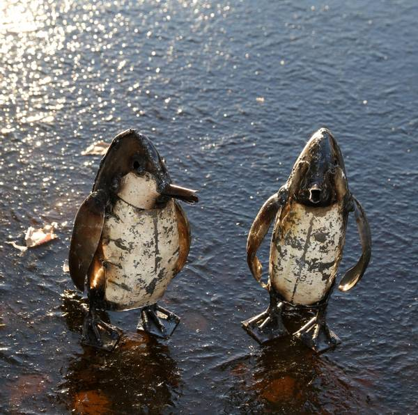 Pingvin baby