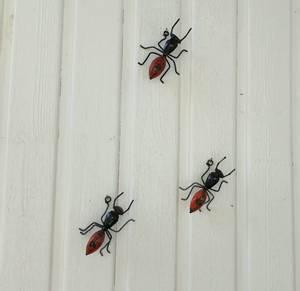 Bilde av Rød maur til vegg 3 pakk
