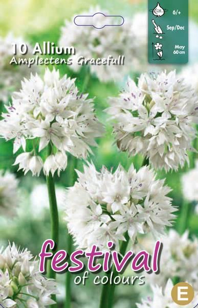 Allium Amp. Graceful  10 pakk