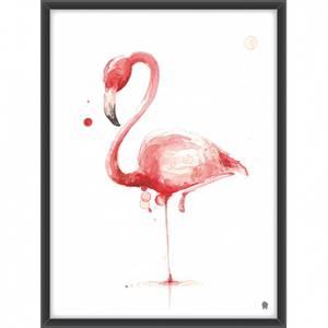 Bilde av Flamingoen