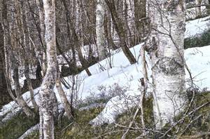 Bilde av Ivar Papadopoulos Samuelsen, Skogsfragment