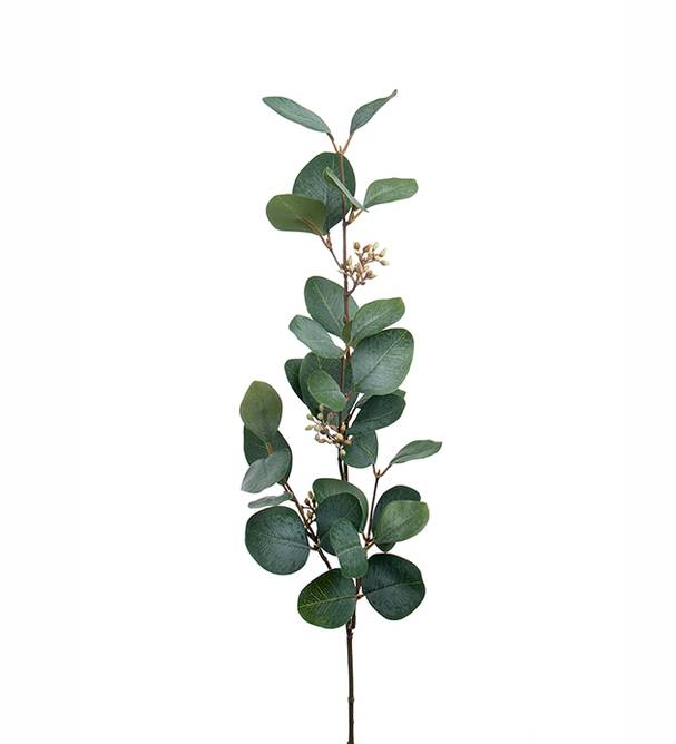 Bilde av Eucalyptus med bär 70 cm