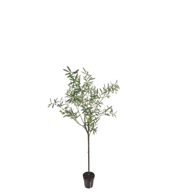 Bilde av Oliv 170 cm