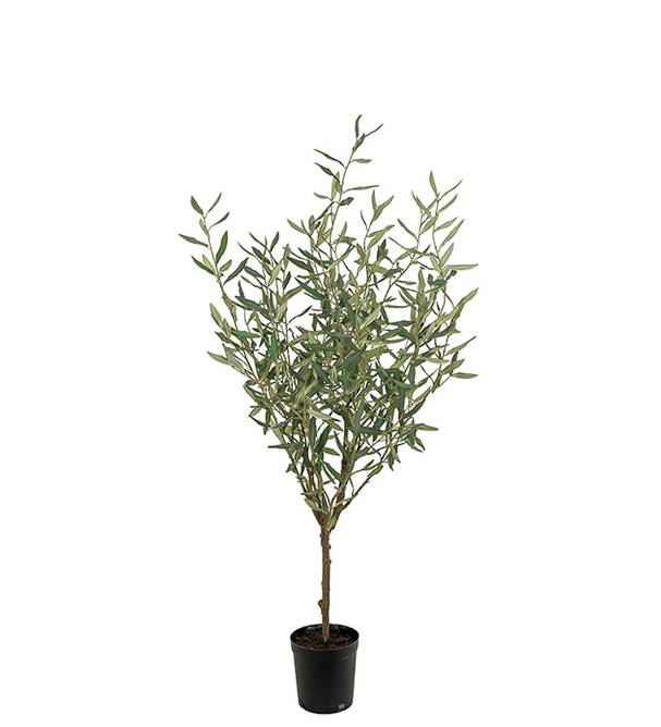 Bilde av Oliv 130 cm