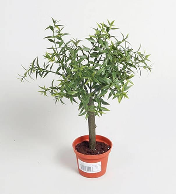 Bilde av Eucalyptus tree Kunstig