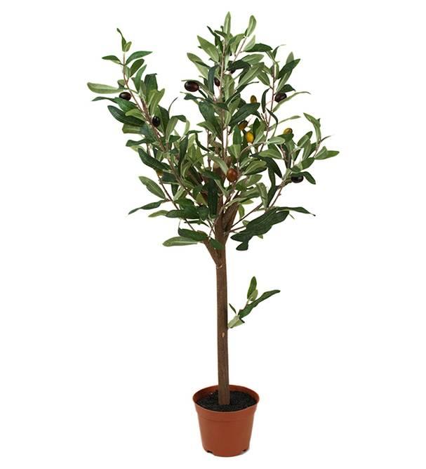 Bilde av Oliv 60 cm
