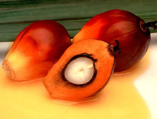 Bilde av Økologisk palmefett 10kg BESTILLINGSVARE