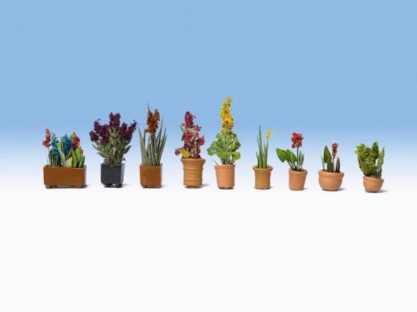 Bilde av Noch - Prydplanter i potter