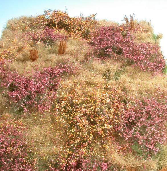 Bilde av MiniNatur - Ugressfelt, høst