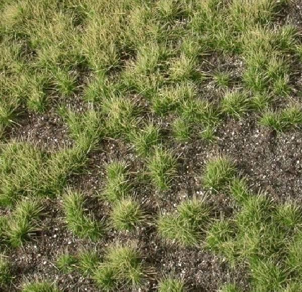 Bilde av MiniNatur - Tilvokst jordbunn, mørk jord