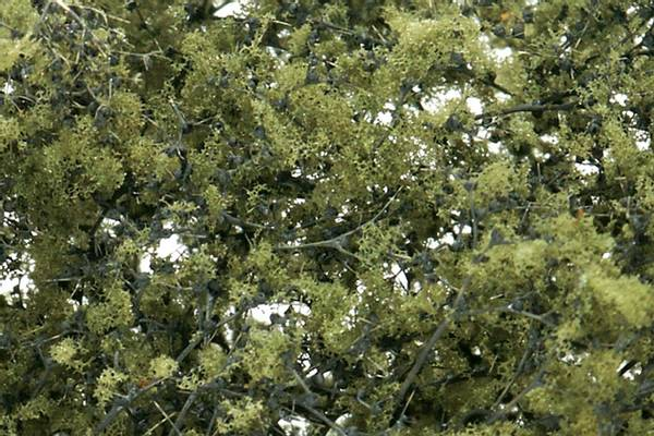 Bilde av Woodland - Fine leaf foliage, olive green