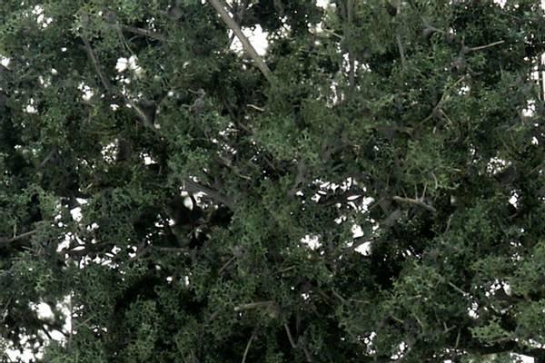 Bilde av Woodland - Fine leaf foliage, dark green